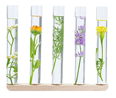 Various plants submerged in clear liquid and placed in test tubes